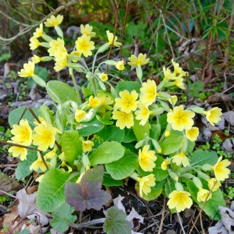 0327 黄色い花